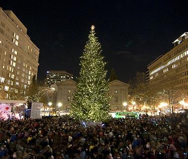 Portland xmas tree