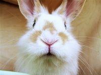 Rabbit_1783219c