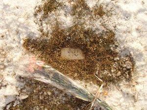 Aqsa Parvez grave plot 774